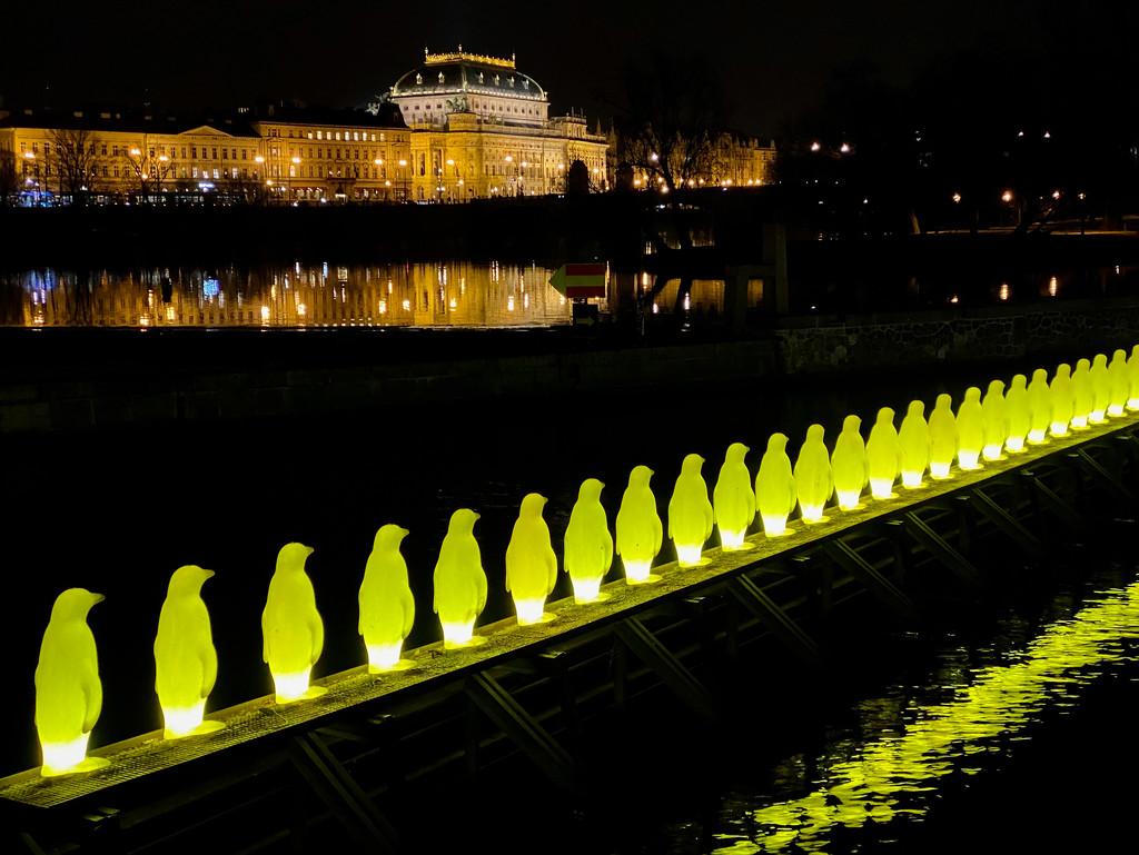 Prague Penguin Procession by jyokota
