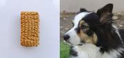 23rd Jan 2020 - Dog Cookie