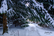 24th Jan 2020 - Winter