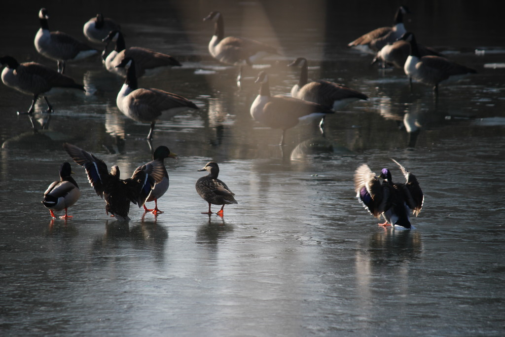 Ice dancing by jb030958