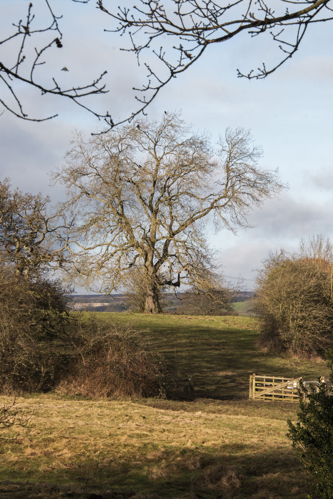 Baildon, West Yorkshire by shepherdman