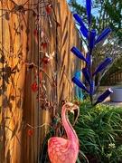 24th Jan 2020 - Jill's Flamingo in the winter sun