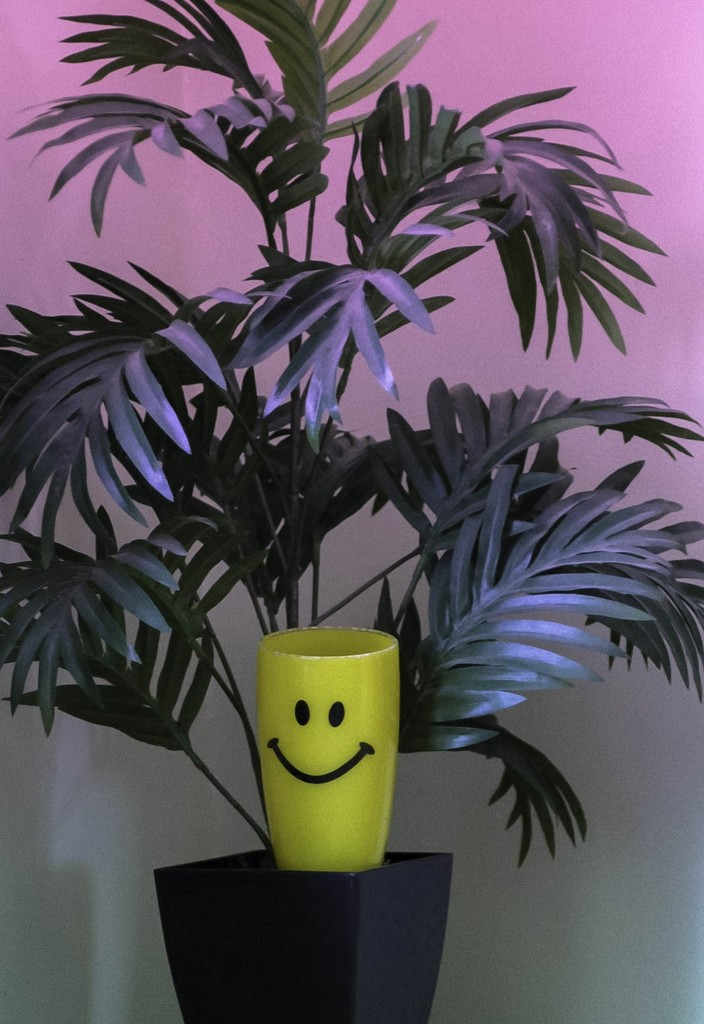 Smiley Cup is in the plant by mittens