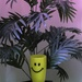 Smiley Cup is in the plant