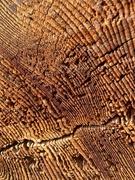 25th Jan 2020 - Wood texture.