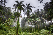24th Jan 2020 - Mount Isabel Rain Forest