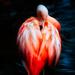 Flamingo Friday '20 04 by stray_shooter