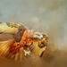 Jackal Buzzard  by ludwigsdiana