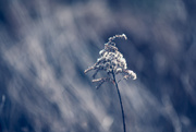 25th Jan 2020 - Winter Bokeh