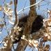 Porcupine In A Tree. by bigdad