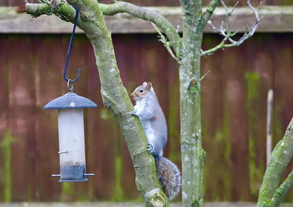If I sit very still she'll think I'm a bird! by carole_sandford