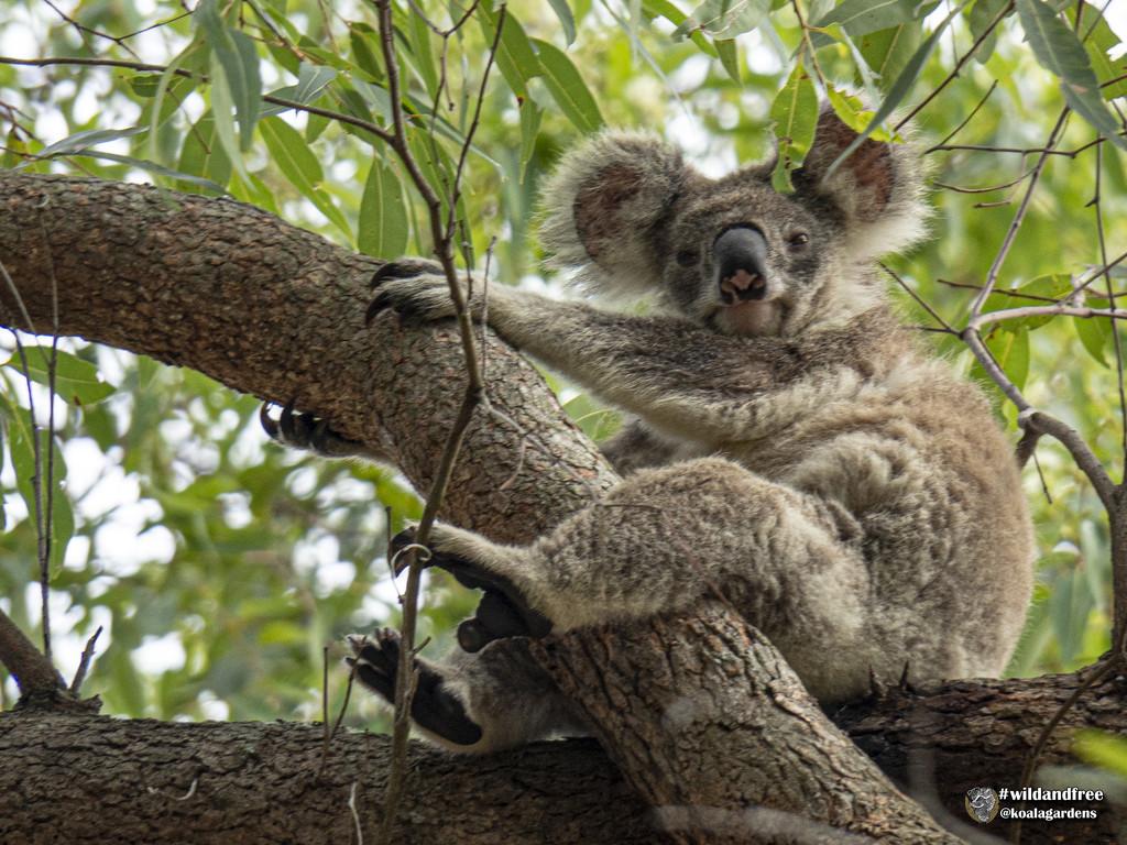 Angel awakes by koalagardens