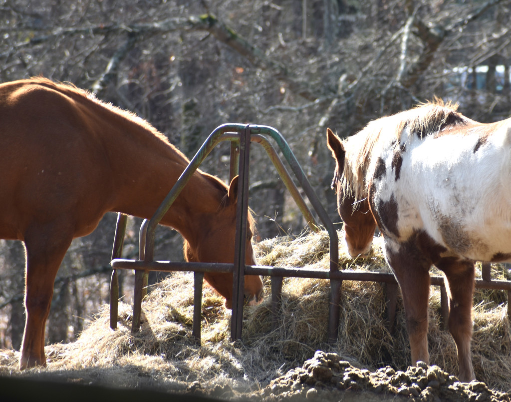 Two horses walk up to a bar..... by homeschoolmom