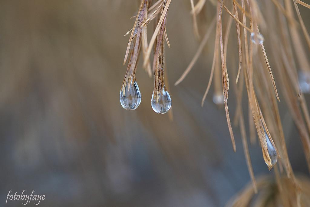A few drips and drops by fayefaye