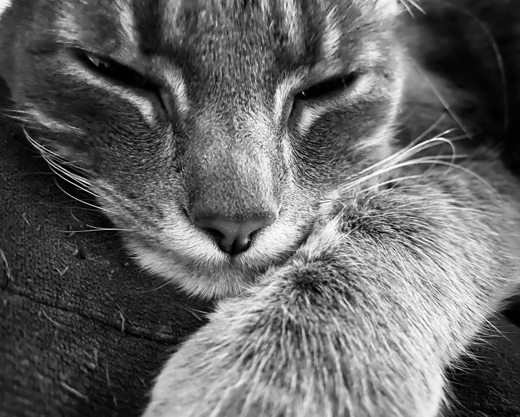 Cat Nap by nanderson