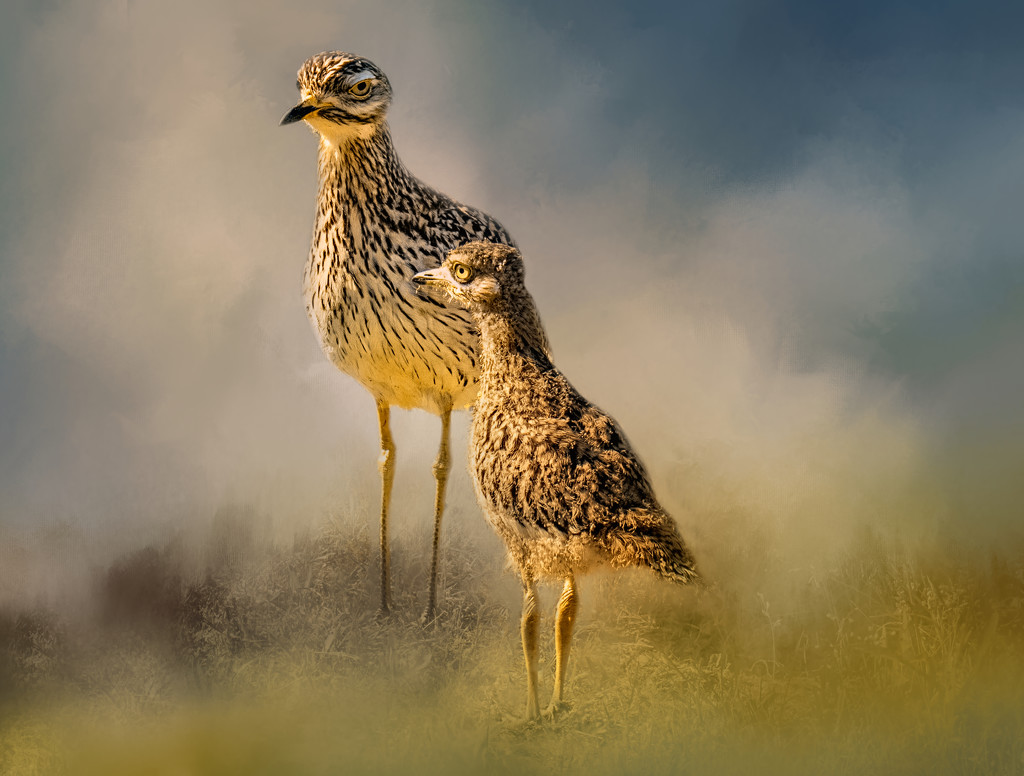 Dikkop Mum and chick by ludwigsdiana