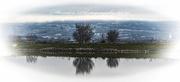 26th Jan 2020 - Lakeside view