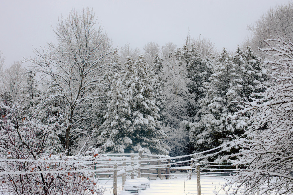 January Words - Weather by farmreporter