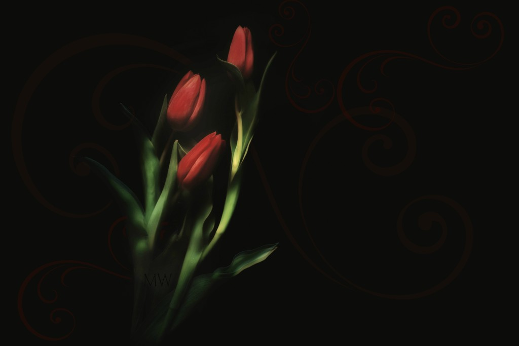 2020-01-26 red tulips by mona65