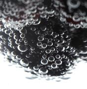 26th Jan 2020 - blackberry3