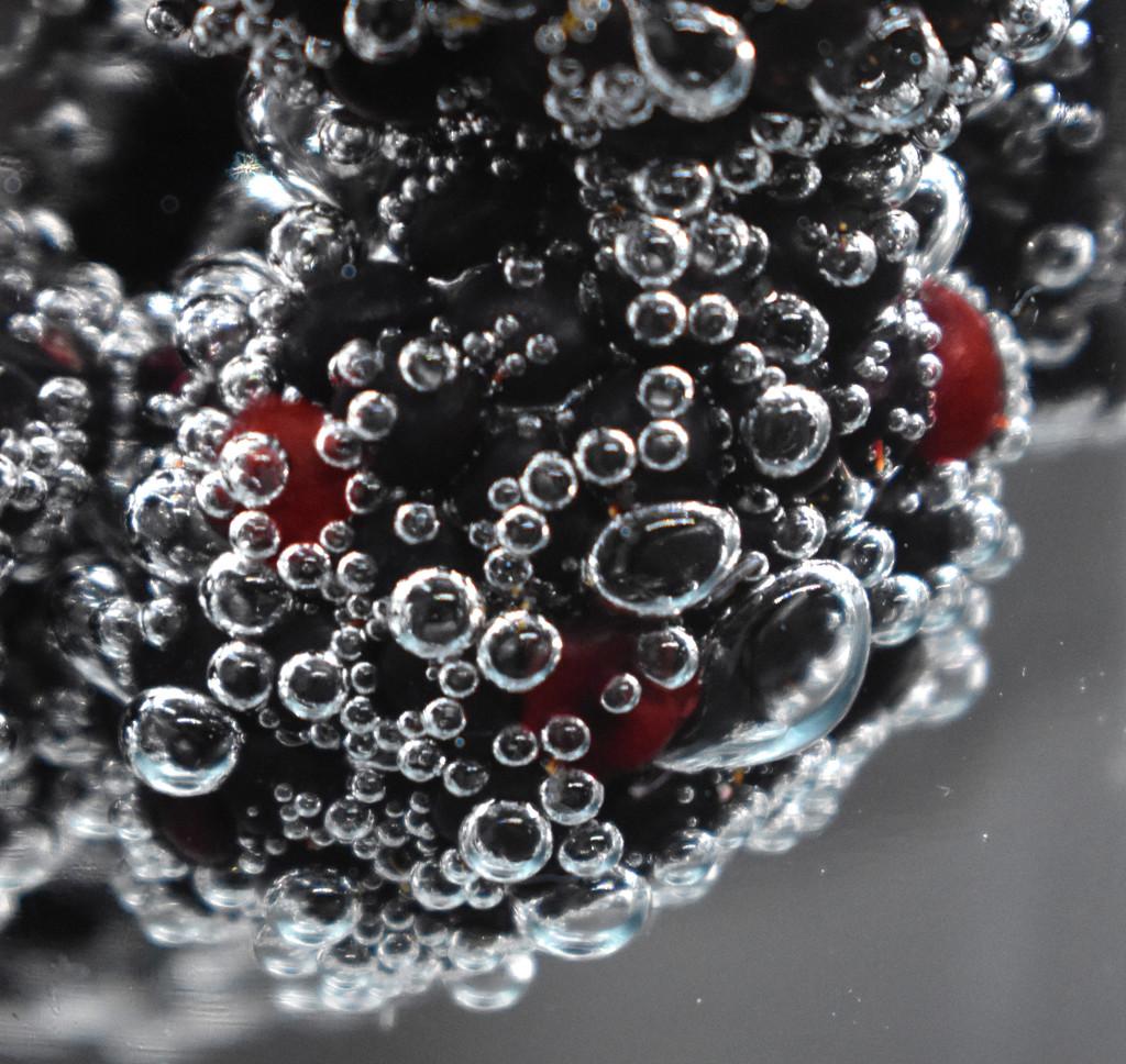 Blackberries bubbles on black by homeschoolmom