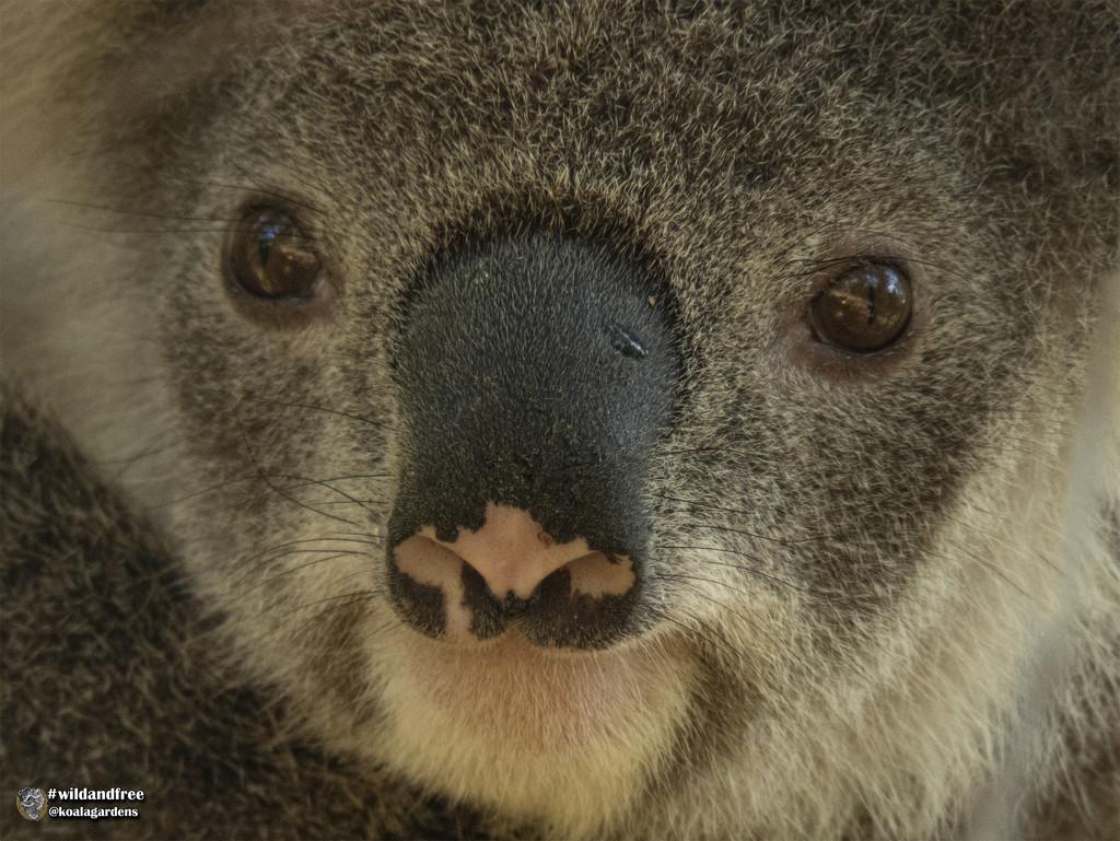 Australia Day by koalagardens