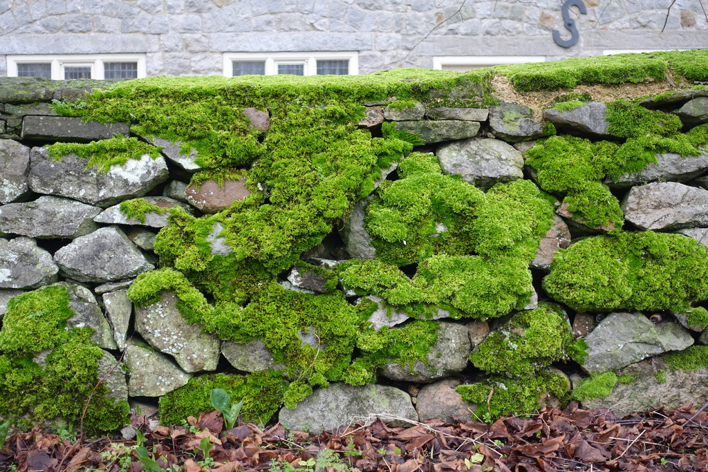 Moss covered wall by johnsutton