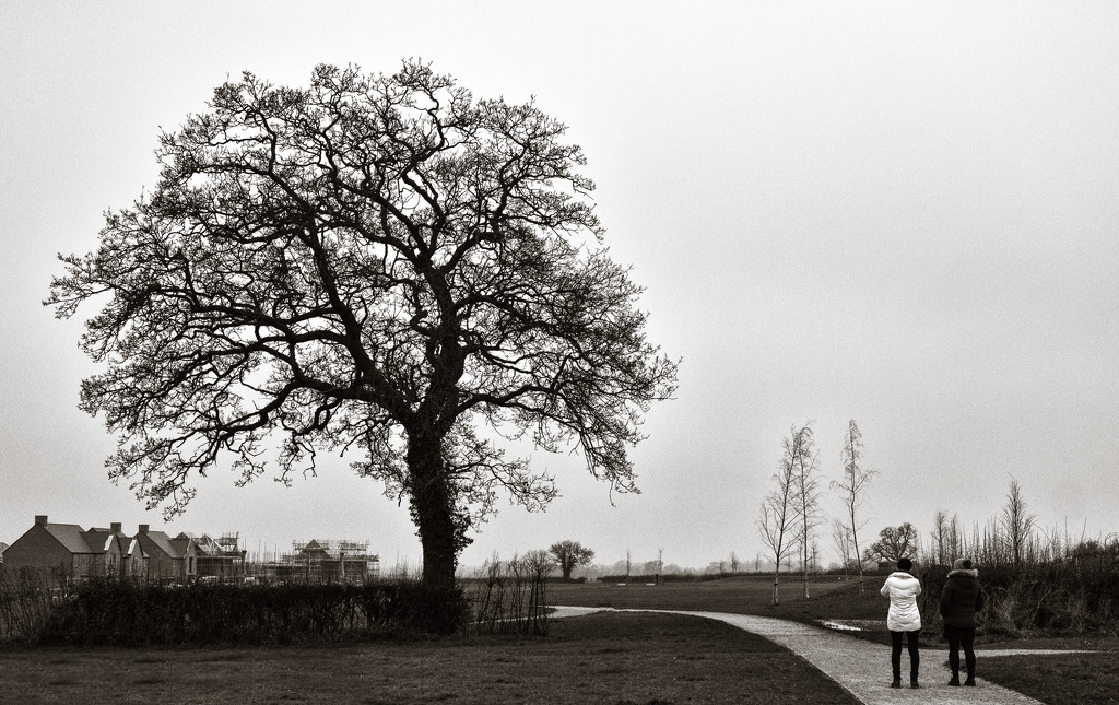 Two Mrs Sayer's and a Tree... by vignouse