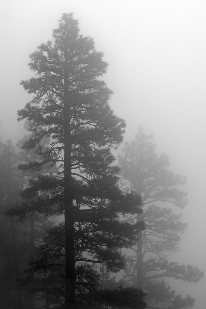 Ghost trees by teriyakih