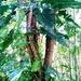 Interesting tree growth