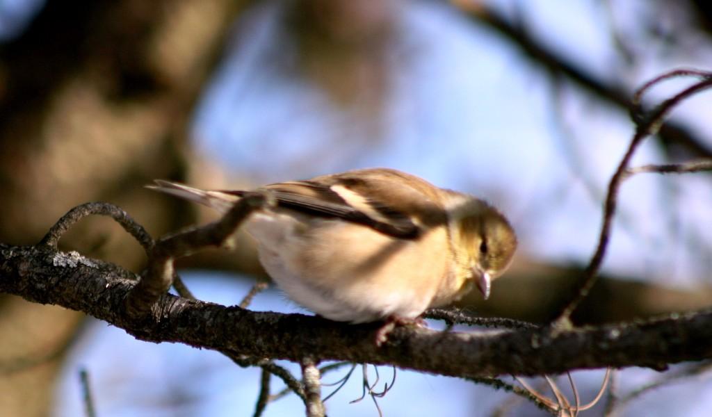 Cute little finch by bruni