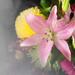Flowers Through Sheers