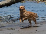 27th Jan 2020 - Happy dog on the beach