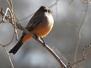 28th Jan 2020 - Bird on a Twig