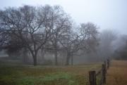 28th Jan 2020 - A foggy morning