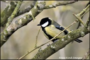 28th Jan 2020 - Lovely great tit