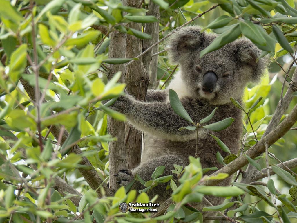 Smokey by koalagardens