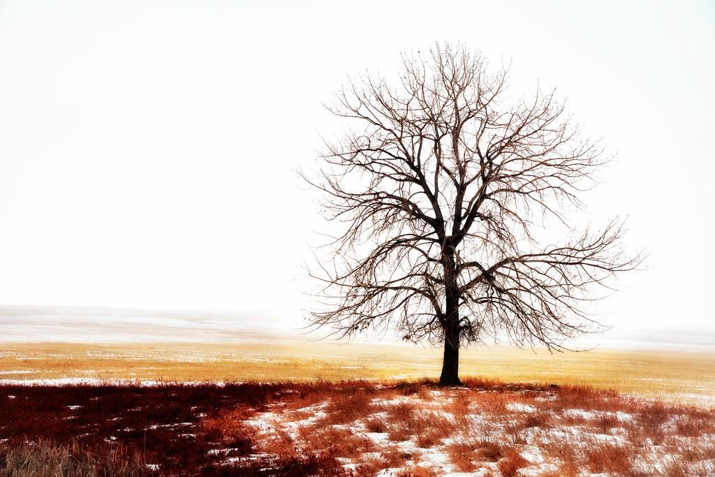 Bigger Loner by bokehdot