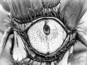 28th Jan 2020 - A tree eye