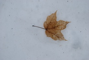 29th Jan 2020 - remnant of Fall