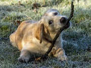29th Jan 2020 - Ellie discovers sticks!