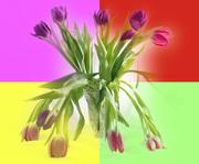 29th Jan 2020 - Tulips