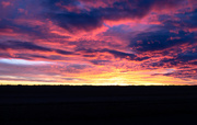29th Jan 2020 - Prairie Life