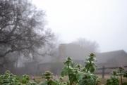 29th Jan 2020 - Weeds love fog