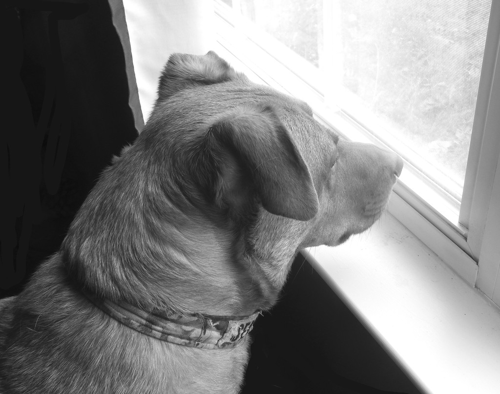 Standing guard by homeschoolmom
