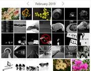 29th Jan 2020 - flashofred2019 and flowers