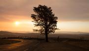 30th Jan 2020 - Sunset road