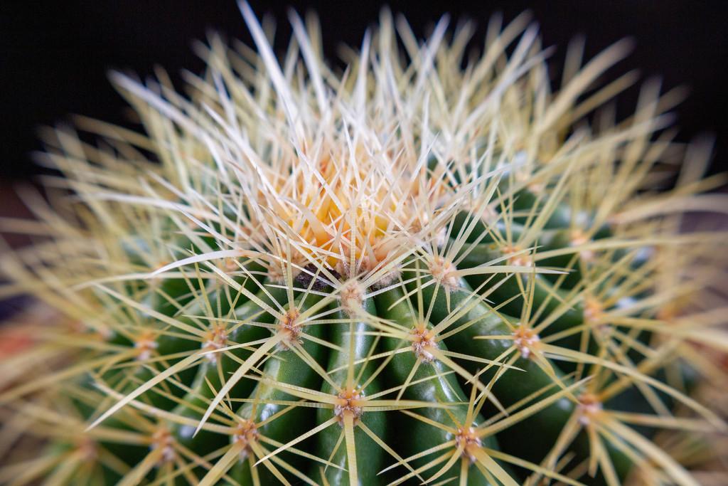 Cactus by gaylewood