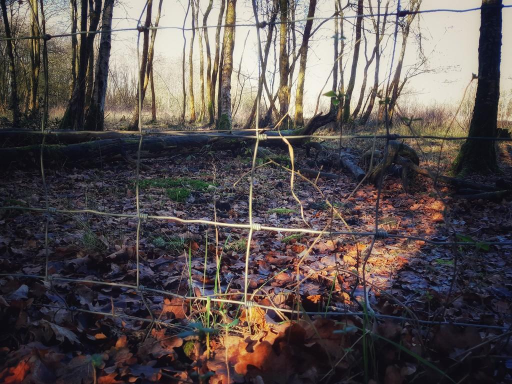 30th Jan wire fence by valpetersen