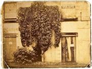 2nd Jan 2020 - Trowbridge Torso Tree